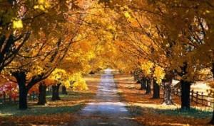 Autumn-353x210