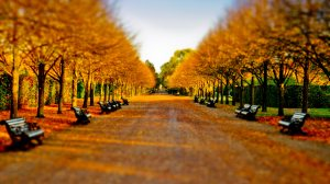 Autumn-in-Regents-Park_Ultra-HD