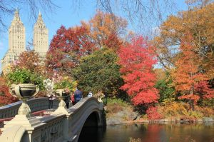 Beautiful autumn views of Central Park in New York (17)
